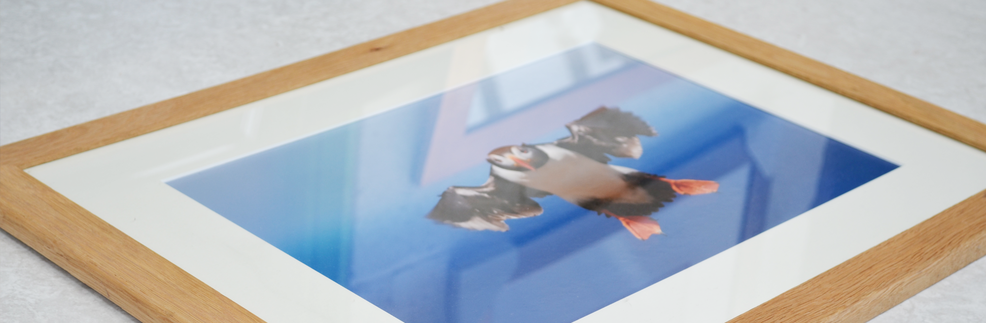 Custom picture framing of a Puffin in flight.